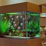 aquarium 19