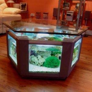 aquarium 32