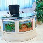 aquarium 33