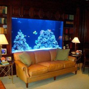aquarium 36