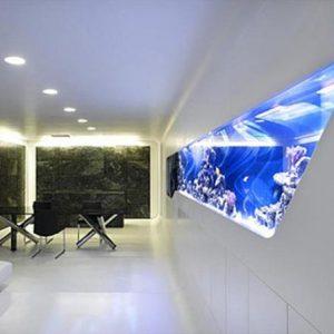 aquarium 41