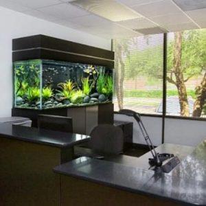 aquarium 43
