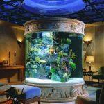 aquarium 49